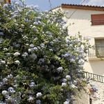 Reservar hotel en Argelita