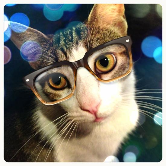 Nerdy Cat (10)