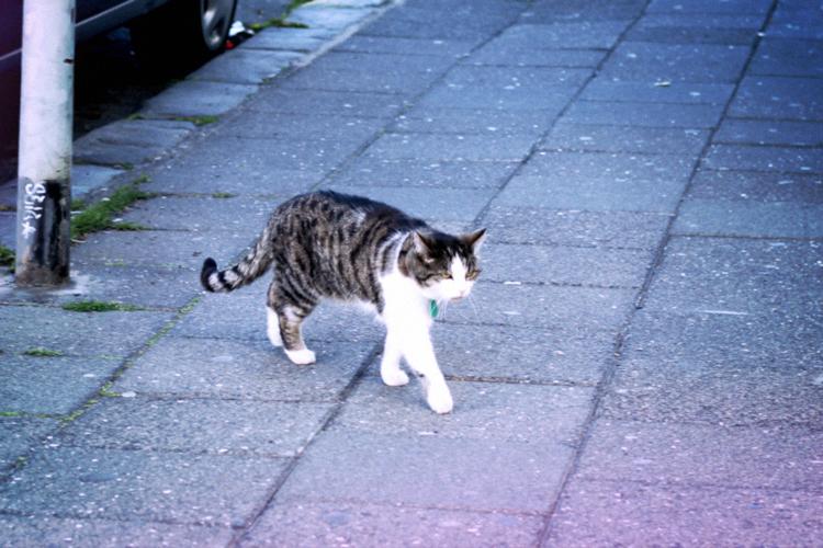 cat reykjavik