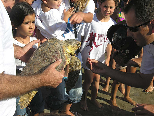 Releasing turtles into the sea at Los Cristianos