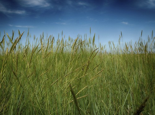 Peering Through The Long Grass
