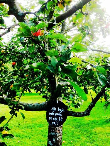 rosendal garden