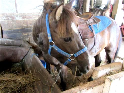 Ponyboy at Pinto Valley Ranch