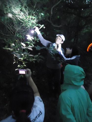 夜間探訪夜行性動物。林子晴攝