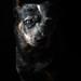 Dot _HRD7527Aw by zingpix