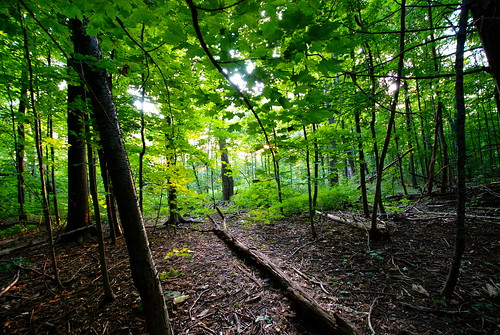 apple church forest photography google amazing nikon flickr oliver blackberry background famous great jefferson pioneer trackday 34000 d80 tumblr d7000