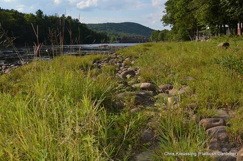 Riparian Plant Community, Hudson River, Riparius, NY