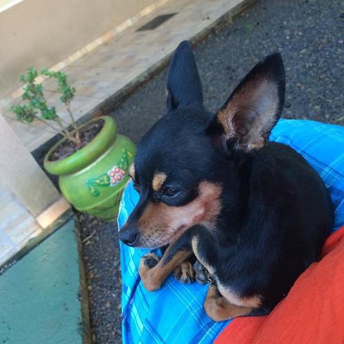 Foz do Iguaçu: le chien de notre hôte nous a complètement adopté ;)
