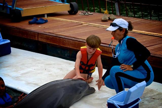 anteketborka.blogspot.com, dauphins12