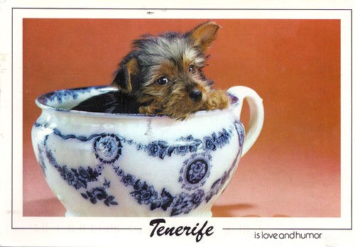 Puppy in Blue China Teacup