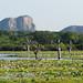 Yala National Park (David Allison)