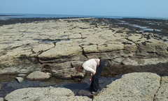 Rock Pooling
