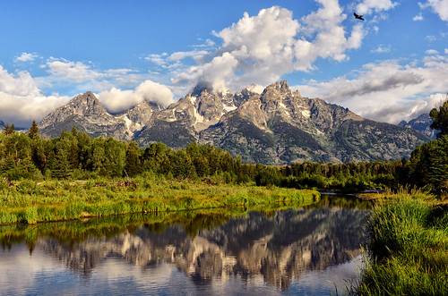 Wings Over Schwabacher