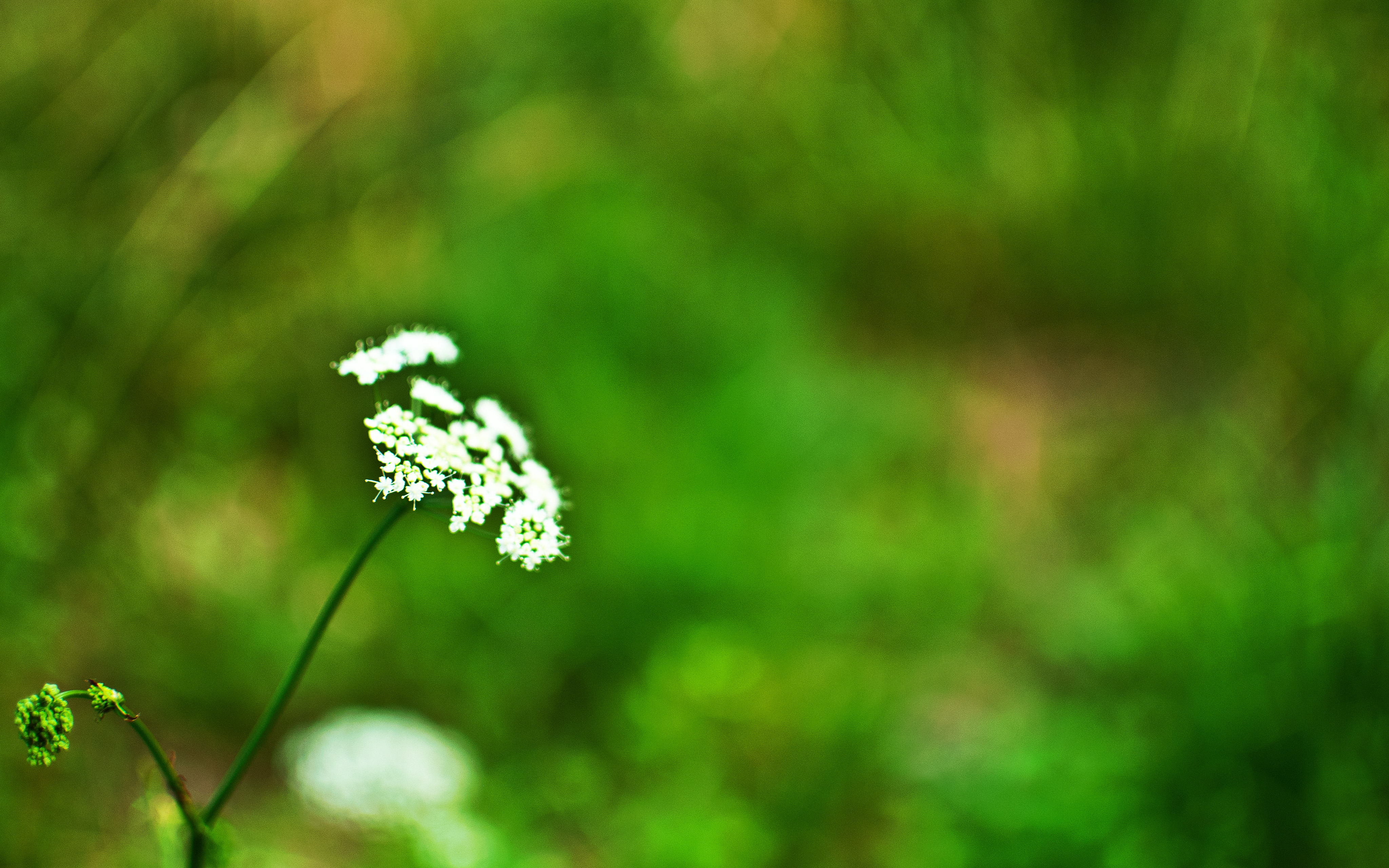 4K Resolution retina wallpaper 16:10 - Flower | Flickr - Photo ...