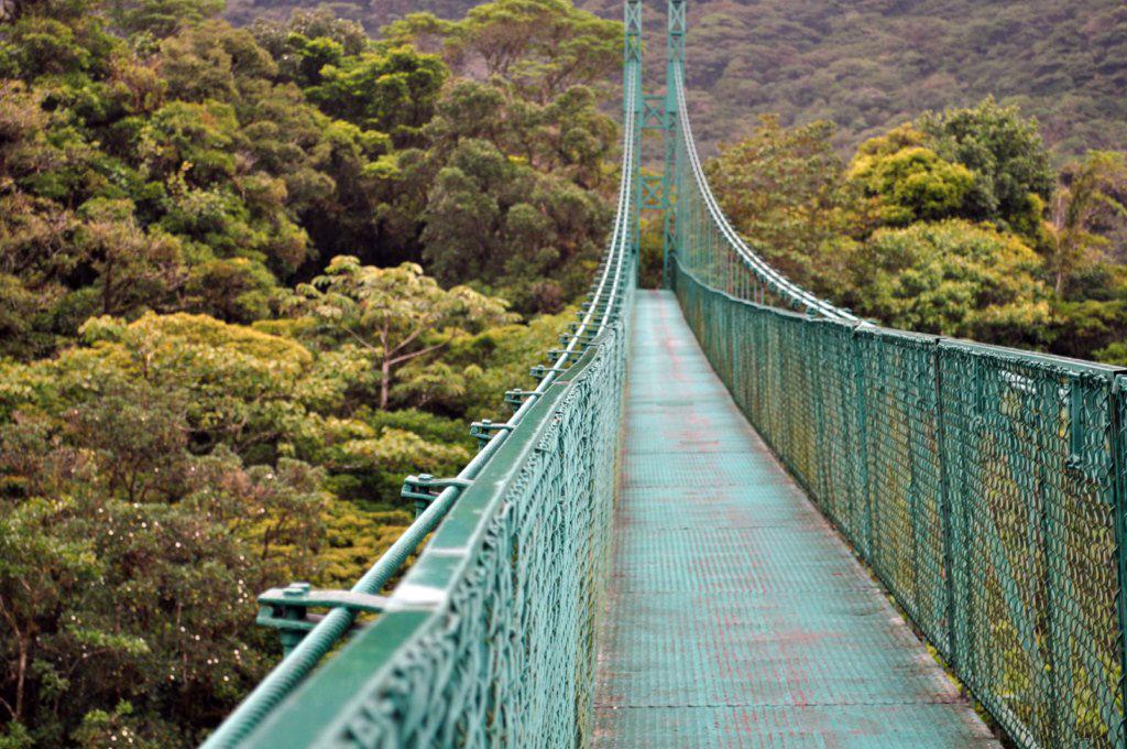 Los puentes colgantes sobre el bosque nuboso de Monteverde ofrecen unas panorámicas de vértigo monteverde, la reserva biológica del bosque nuboso - 7735231804 b428f063ba o - Monteverde, La reserva biológica del bosque nuboso
