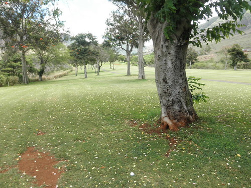 Makaha Valley Country Club 180