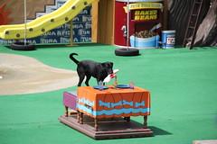 Pets Rule Show - SeaWorld 5