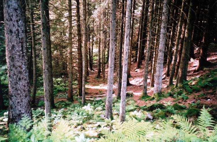 norwegian forest, bergen