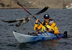 Sea kayaking in Peru with Nature Expeditions
