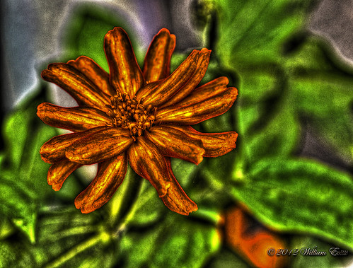 flower macro nature explore postproduction photoshopelements photomatix