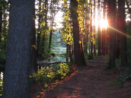 trees sun ma woods massachusetts ashley reservoir