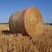 Small photo of Straw galore!
