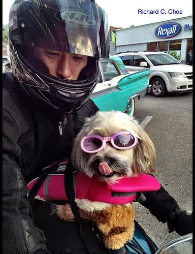 Fancy Rider, Paris, Ontario by rchoephoto