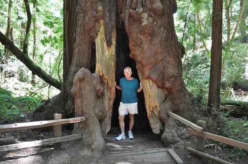 Dad Redwood