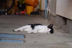cats_2012-08-20_5