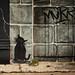 Everyday New Orleans: Street Art by marysmyth(NOLA13) ️