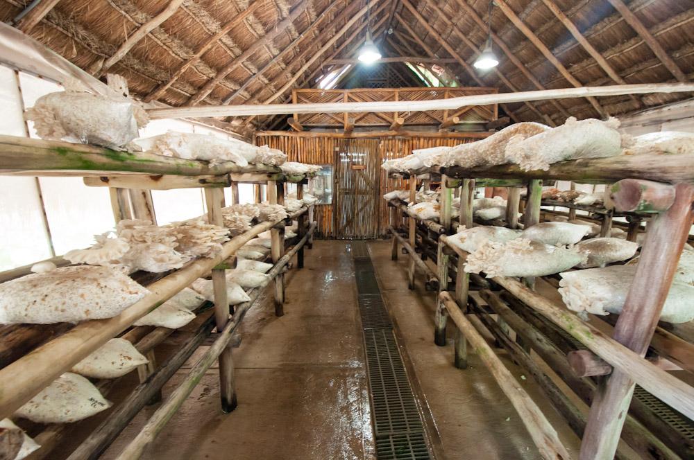 La granja de hongos de Xcaret