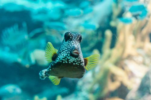El Acuario de Arrecife de Coral en Xcaret