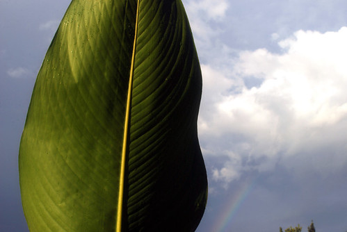 leaf in the rainbow light