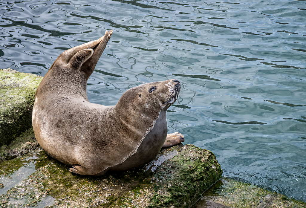 _Seal in the Solent