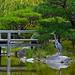 Settle Japanese Garden by Aurora Santiago Photography