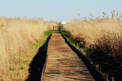 La comarca natural de #LaMancha tiene muchos encantos por los que merece la pena venir (además claro está de las bodegas). La Laguna de Manjavacas ubicada en el término municipal de Mota del Cuervo es una de las zonas lacustres más importantes de la regió