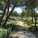 Archaeological Park (Stuart Elsom)