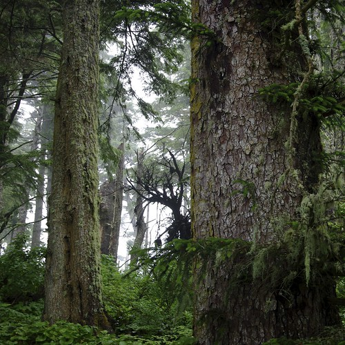 Lucy Island Forest