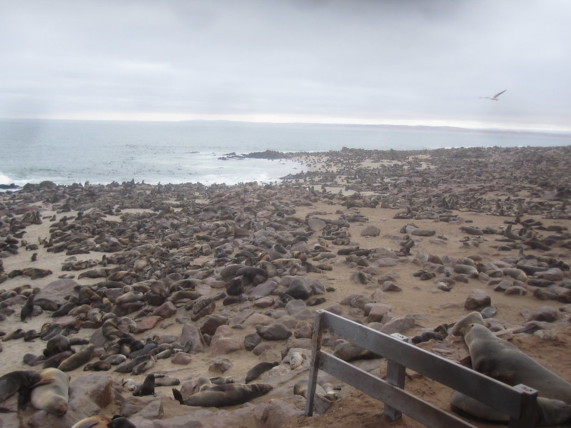 Cape Cross Namibia Seals Africa