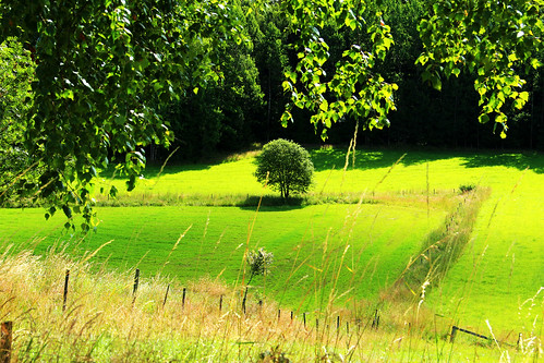 summer tree colors field canon fence sweden country 100commentgroup peternyhlén mygearandme