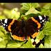 Butterfly 1 by Zekkai