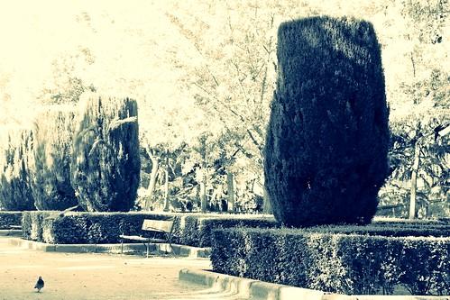 Sabatini's garden