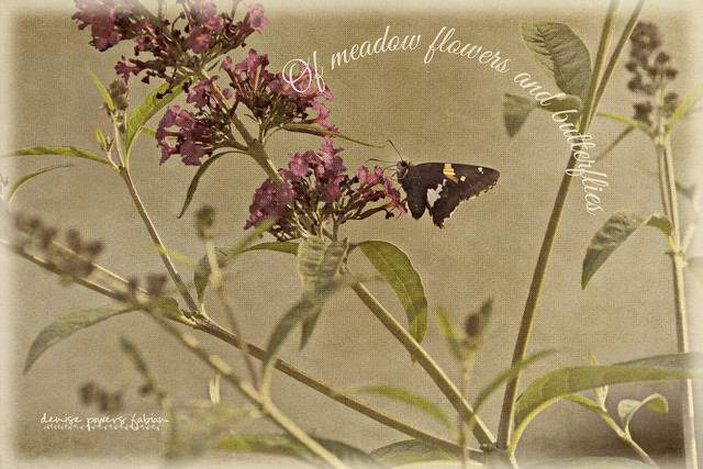 Of Meadow Flowers and Butterflies