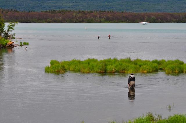 Co-existence of bear and human [Katmai National Park]