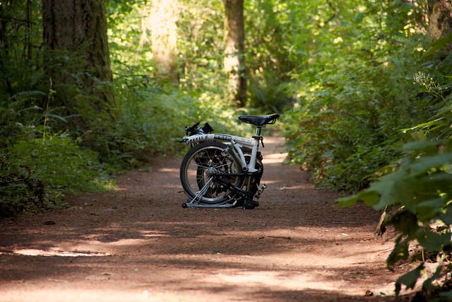 Brompton in the Woods