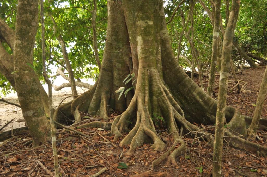 Parque Nacional de Manuel Antonio en Costa Rica Parque Nacional Manuel Antonio en Costa Rica, el más pequeño y más popular - 7734682506 13b1d0137b o - Parque Nacional Manuel Antonio en Costa Rica, el más pequeño y más popular