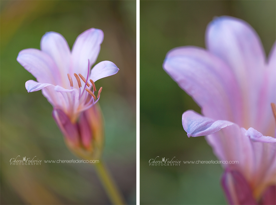 Lilies Diptych