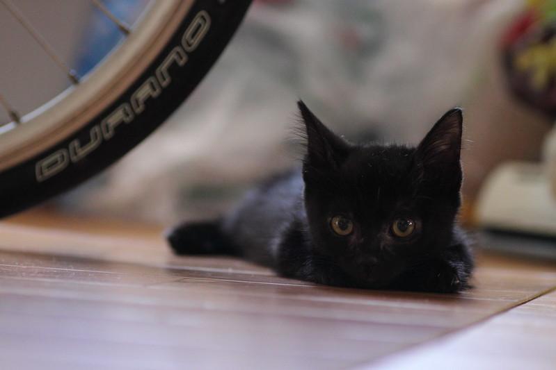 黒猫シャー子と自転車