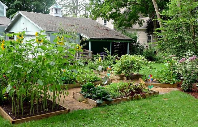 Backyard Garden 2012