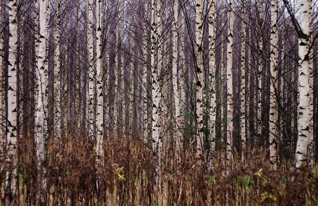 Birchy